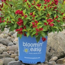 Bloomin' Easy™ Plants - To learn more: