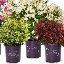 First Editions™ Plants - To learn more: