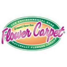 Flower Carpet® Roses
