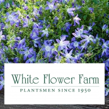 White Flower Farm™ -  To learn more: