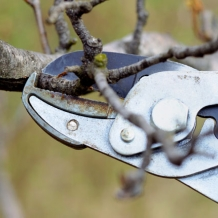 Know how to prune.  Read more pruning tips from Bower & Branch™: