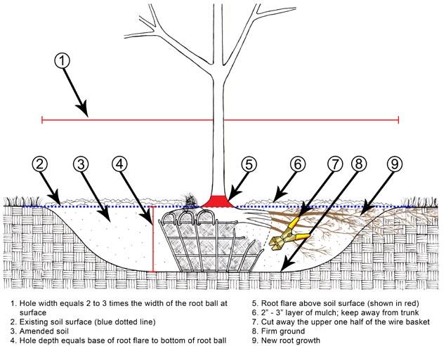 How To Plant 187 Wildwood Nursery Amp Garden Center