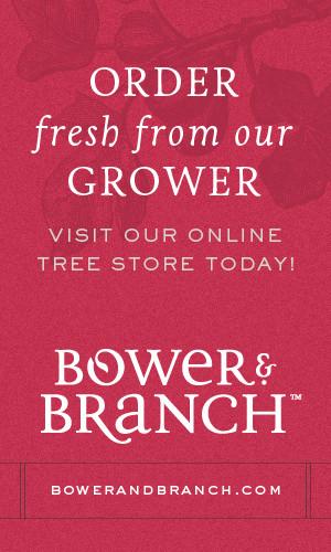 BowerBranch-300x500-Order_Fresh.jpg